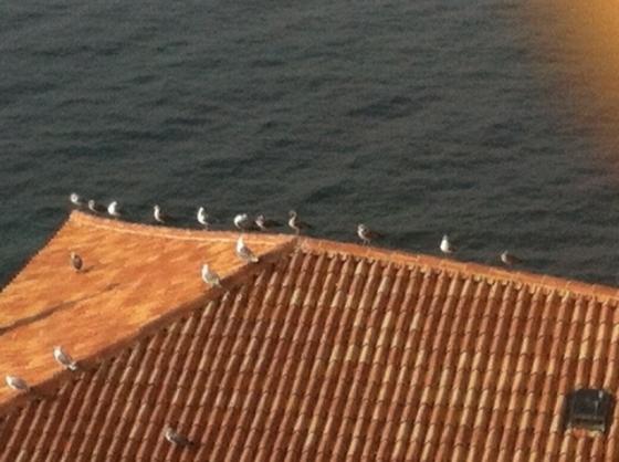 I gabbiani raccolti sul tetto di una casa sul mare