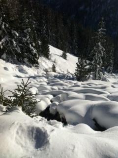 Kafka sulla neve: metamorfosicamente, il manto nevoso si adatta al terreno che copre